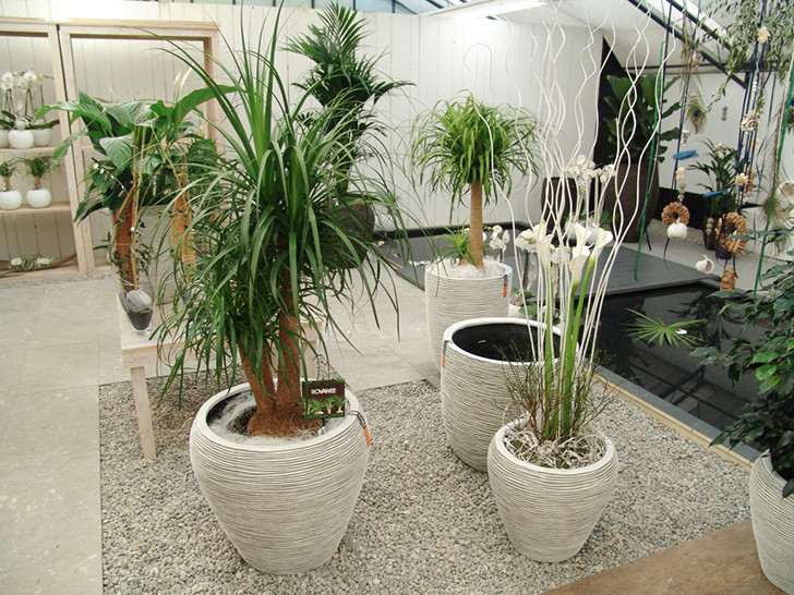 Sortiment Gartencenter Rutishauser Ag Zuberwangen